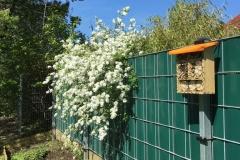 Projekt-Garten